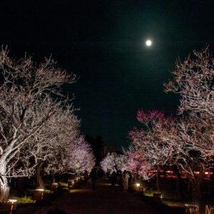 偕楽園から望む水戸の月